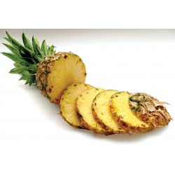 ANANAS COUPES